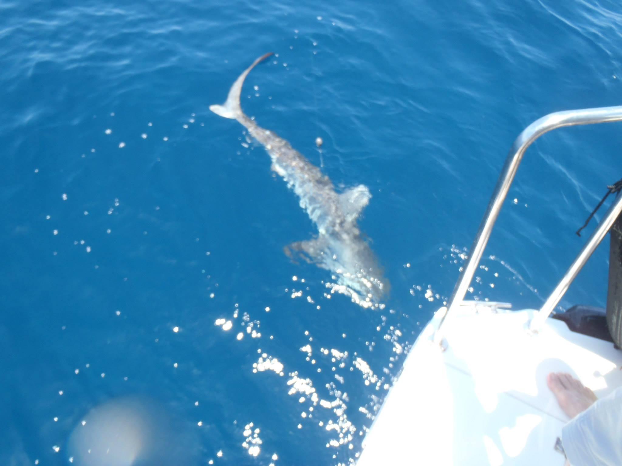shark circling boat offshore