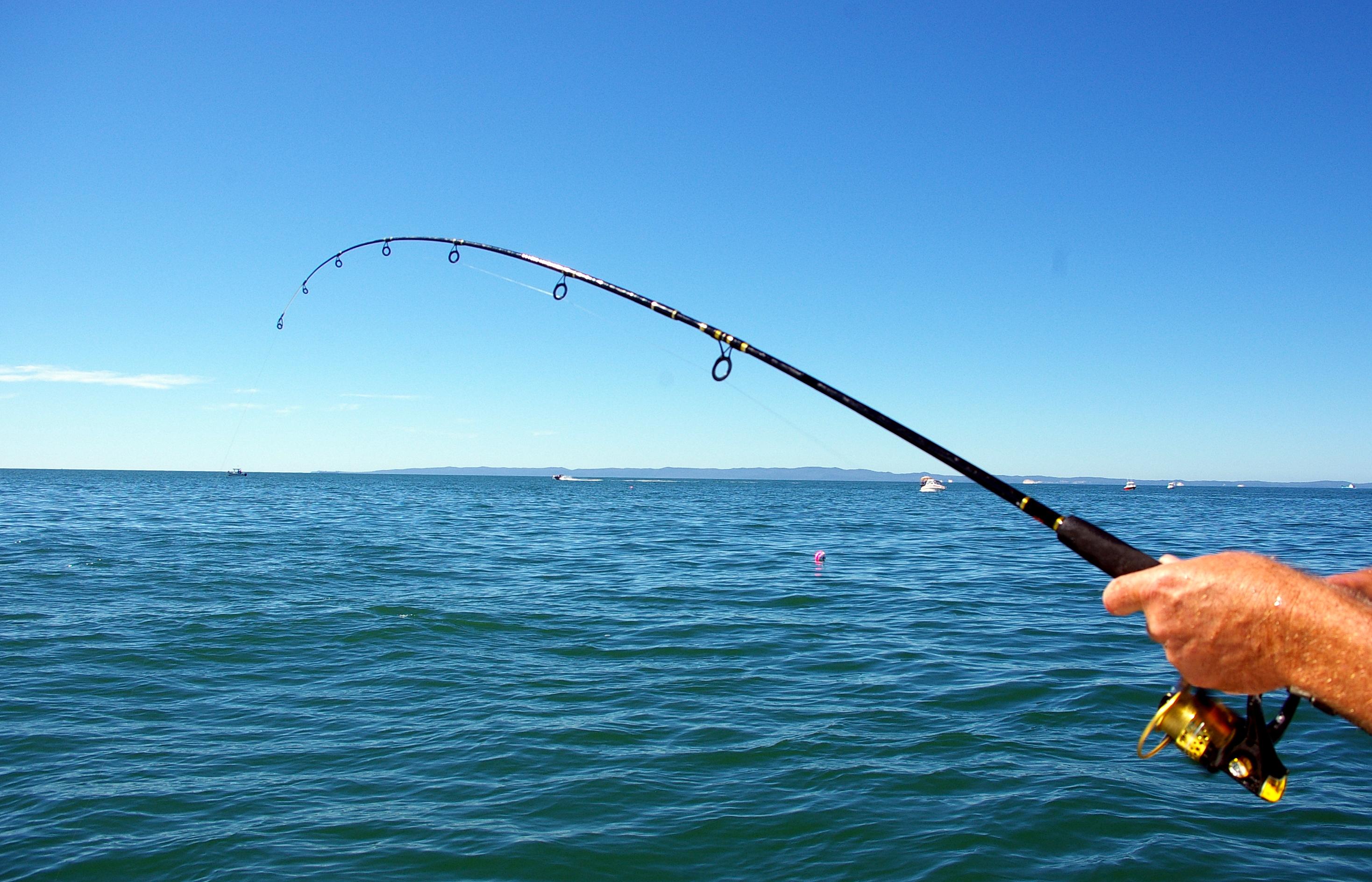 rod tip bent while fishing